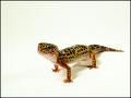 Like a leopard...gecko