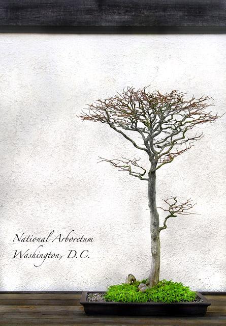 National Arboretum, Washington, D.C.