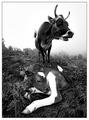 Bovine Burlesque