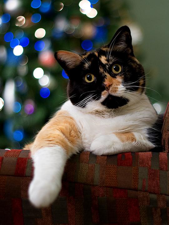 A Christmas Kitty