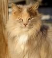the Barn Cat (aka Fuzzel)
