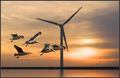SeaGulls And WindMill