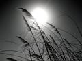 Far Away - Nickleback