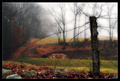 Barbarous Landscape