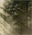Misty Rays