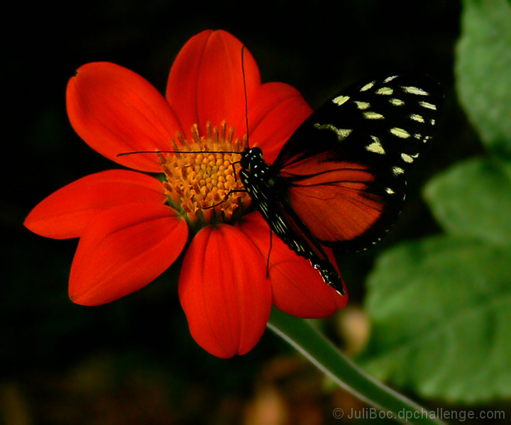 Butterfly Camouflage by JuliBoc - DPChallenge