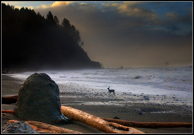 Solitude's Dawn