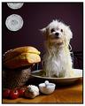 Chef's Apprentice