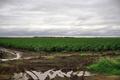 Good crops, good rain, good season