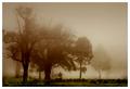 . morning mist .