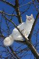 Mackenzie in the Cherry Tree