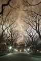 Midnight Canopy II