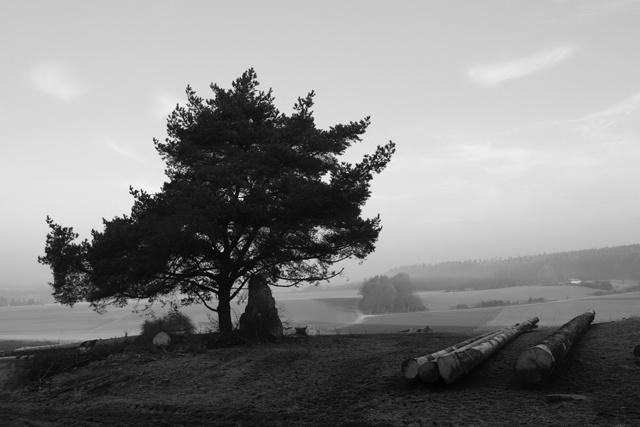 ~a tree~