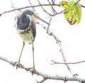 IMG 0475 Condo Bird