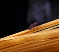 Spaghetti Climber