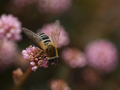 buzzing busily