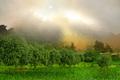 Fog Aloft