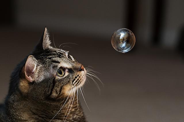 Catnip Bubble