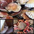 Ocean feast