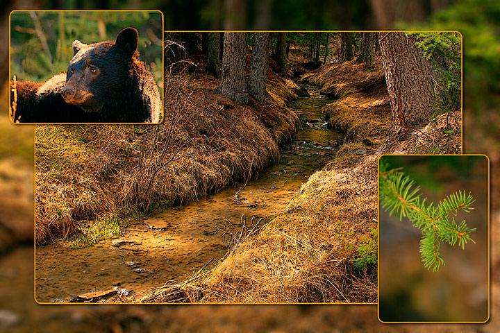 Blackbear Creek