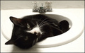 Why does my cat like sinks?
