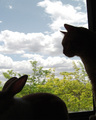 Cat and rabbit encounter captured
