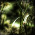 Journey Through The Undergrowth.