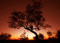 sunset on the marula