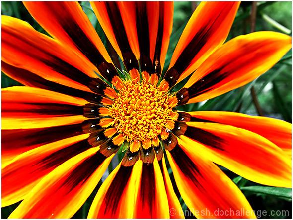 Energetic Flower