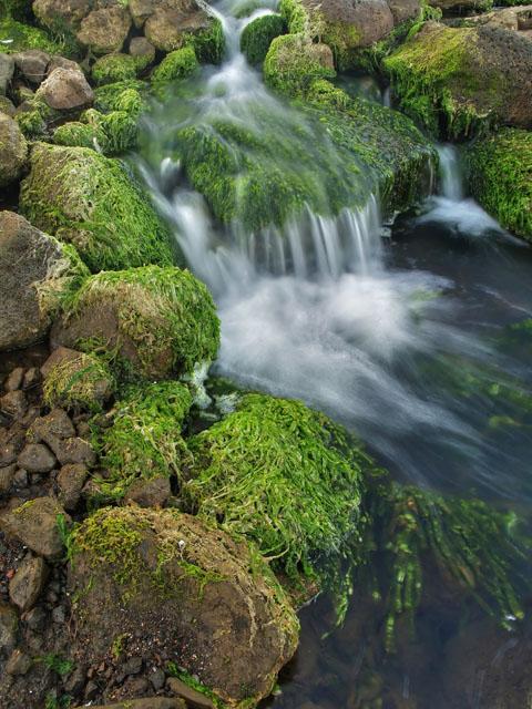 Burst of green