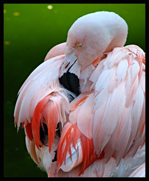 pink groomer
