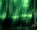 I wandered through a verdant glow...