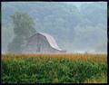 Dawn Kissed Corn Field