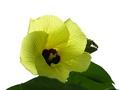 Hou to backlight a flower naturally