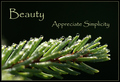 Beauty - Appreciate Simplicity