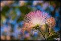 Bokeh Blossom
