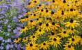 Le vent A Rempli des Fleurs (Wind Filled Flowers)