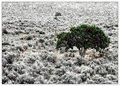 Desert Topiary