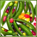 A Bushel of Jelly Beans