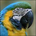 Macaw Study by Seanachai