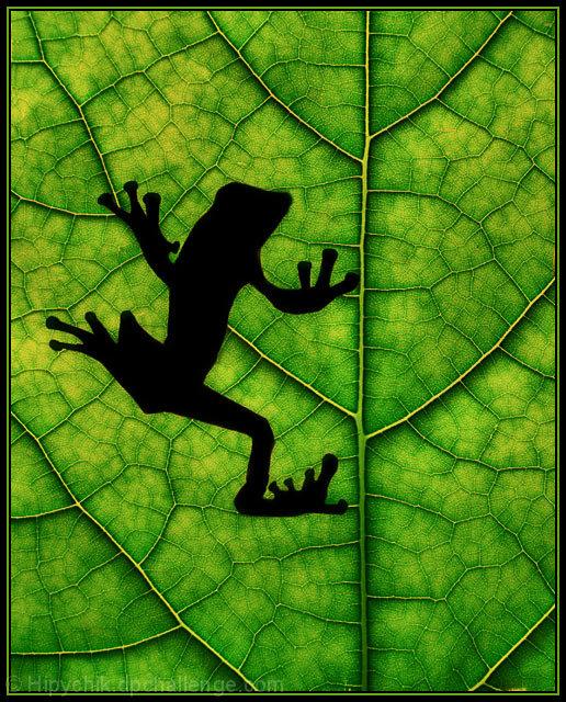 """Tribute to Yakatme's """"Rainforest"""""""