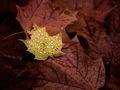 Autumn's Flora