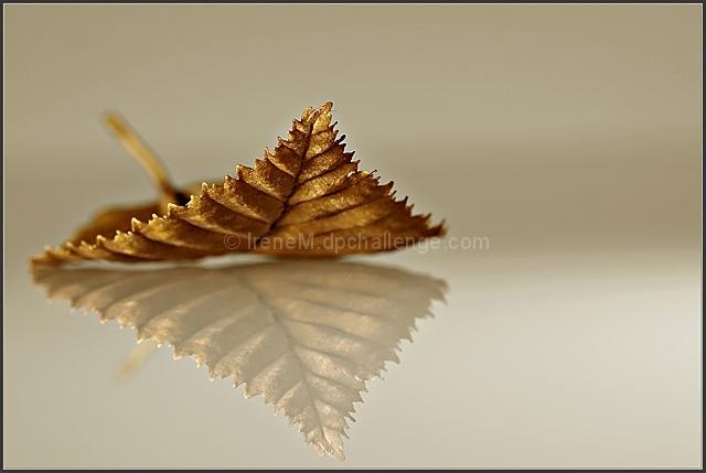 Dry old leaf