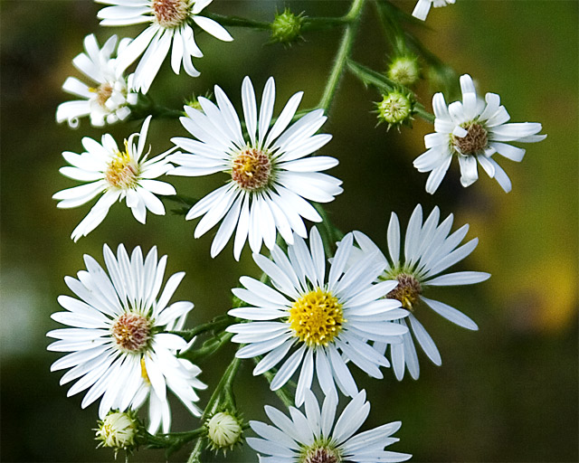 Wildflower Simplicity