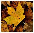 A Graceful Fall