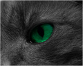 Green Eyes?