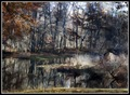 Mystical Pond