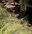 Caché dans la forêt
