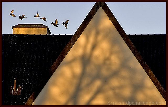 Birds and Shadows