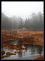 Wandering Waters